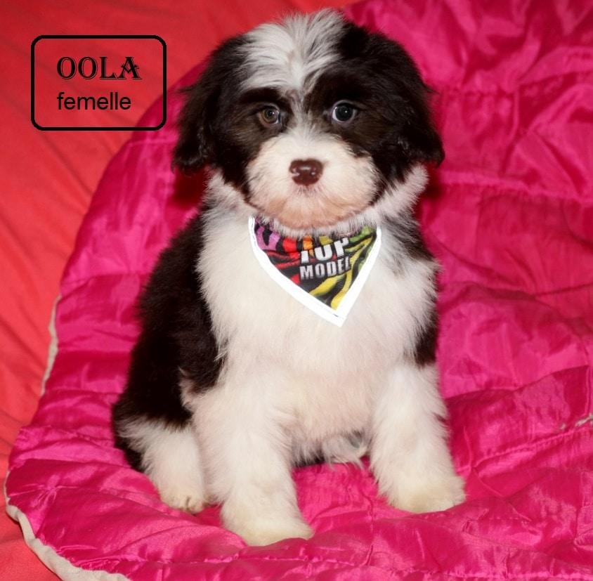 OOLA 01