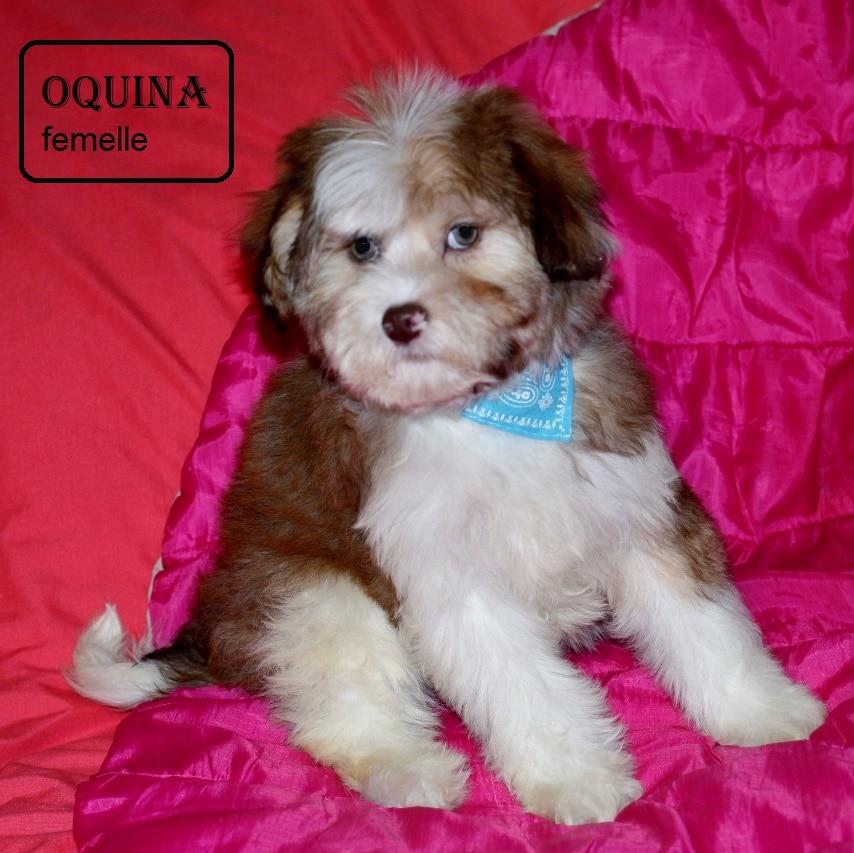 OQUINA 01